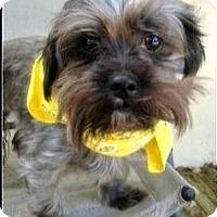 Adopt A Pet :: Zeek - Ft Myers, FL