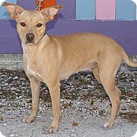Adopt A Pet :: Lizzy - Englewood, FL