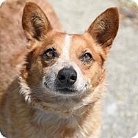 Adopt A Pet :: SASSY - Pt. Richmond, CA