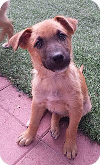 Adopt A Pet :: Mick  - Snow Hill, NC