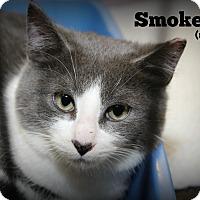 Adopt A Pet :: Smokey - Springfield, PA