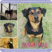 Adopt A Pet :: Bessie Mae - Hearne, TX