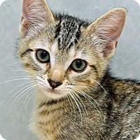 Adopt A Pet :: Libra - Greenfield, IN