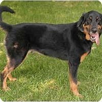 Adopt A Pet :: Tucker - Chicago, IL