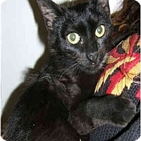 Adopt A Pet :: Little  Lisa - New York, NY