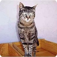 Adopt A Pet :: Sophia - El Cajon, CA