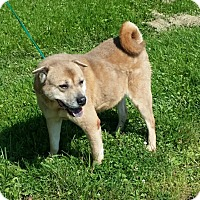 Adopt A Pet :: Auggie - RESCUED! - Zanesville, OH