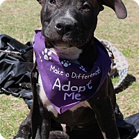 Adopt A Pet :: Magic Mike - Atlanta, GA