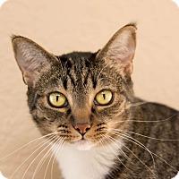 Adopt A Pet :: Hanna - Fountain Hills, AZ