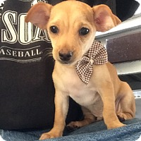 Adopt A Pet :: Chipper - Los Angeles, CA