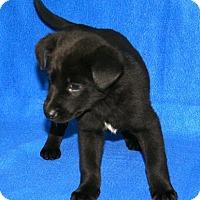 Adopt A Pet :: Dasher - Erwin, TN