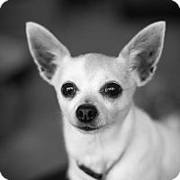Adopt A Pet :: Mindy - Dallas, TX