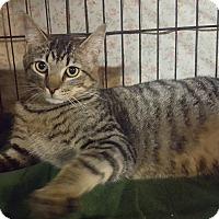 Adopt A Pet :: Buddy - Staten Island, NY