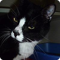 Adopt A Pet :: Billy Bob - Hamburg, NY