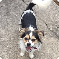 Adopt A Pet :: Will - Newport, KY