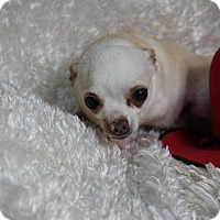 Adopt A Pet :: Max - Sioux Falls, SD
