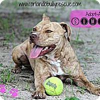 Adopt A Pet :: Summer - Orlando, FL