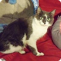 Adopt A Pet :: Sweetie - Randallstown, MD