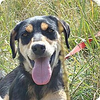 Adopt A Pet :: Debby - Redmond, WA