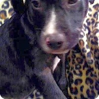 Adopt A Pet :: Henry - Knoxville, TN