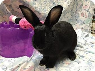 New Zealand Mix for adoption in Woburn, Massachusetts - Alexis