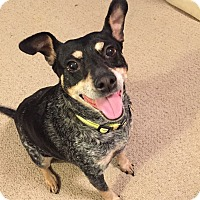 Adopt A Pet :: Maggie H - Knoxville, TN