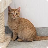 Adopt A Pet :: Leo Daniel - St. Paul, MN