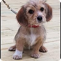 Adopt A Pet :: Hoppy - Milford, NJ