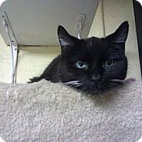 Adopt A Pet :: France - Lombard, IL