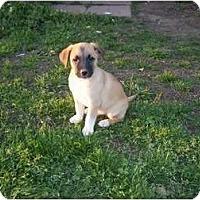 Adopt A Pet :: Sawyer - Adamsville, TN
