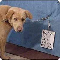 Adopt A Pet :: Skip/Rescued! - Zanesville, OH