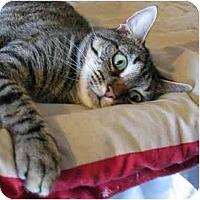 Adopt A Pet :: Ethel - Plainville, MA