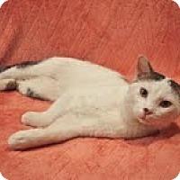 Adopt A Pet :: Minodo - Chicago, IL