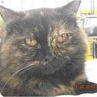 Adopt A Pet :: Rosy - Riverside, RI