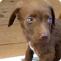 Adopt A Pet :: Magnus handsome - Sacramento, CA