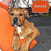 Adopt A Pet :: Arnold - Sunnyvale, CA