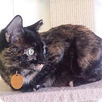 Adopt A Pet :: Astrid - Edmond, OK