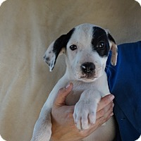 Adopt A Pet :: Champ - Oviedo, FL