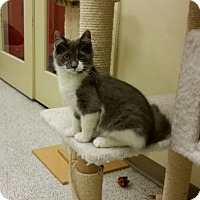 Adopt A Pet :: Kringle - Phoenix, AZ
