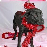Adopt A Pet :: Webster - Erwin, TN