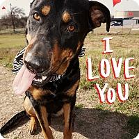 Adopt A Pet :: Calista - Converse, TX