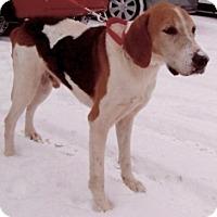 Adopt A Pet :: ROCKFORD - Albany, NY