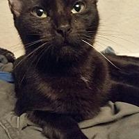 Adopt A Pet :: Juno - Ocala, FL