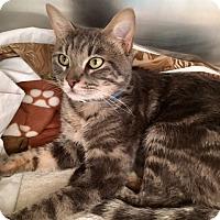 Adopt A Pet :: Robert - Las Vegas, NV