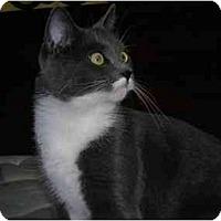 Adopt A Pet :: Marilyn - Richmond, VA