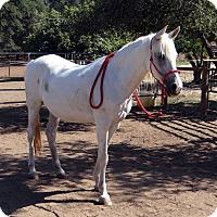 Adopt A Pet :: April - El Dorado Hills, CA