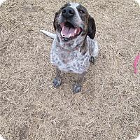 Adopt A Pet :: Anna Belle - Gadsden, AL