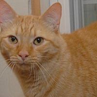 Adopt A Pet :: Nutter-Butter - Jaffrey, NH