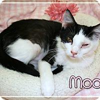 Adopt A Pet :: Moo - Bartlett, TN