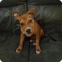 Adopt A Pet :: Jax - Homestead, FL
